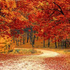 6792 Autumn Driveway Orange Leaves Background Printed Backdrop