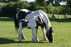 Mare And Foal, Foal, Piebald, Mare