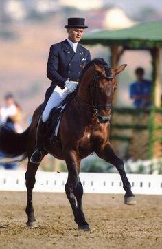 Guizo  (Zasebande x Catraia)  Lusitano Stallion