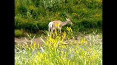 BEAUTIFUL WILD ANIMALS & NATURAL VIEWS   DINESH VORA