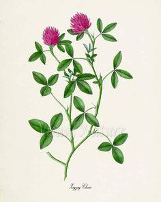 Zigzag Clover Flower Art Print, Botanical Art Print, Flower Wall Art,  Flower Print, Pink Flower Art 298b2886b09