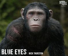 Meet Blue Eyes, Ceasar's son and one day leader of the ape community.