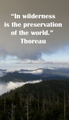 """""""In wilderness is the preservation of the world."""" Thoreau -- Image of Great Smoky Mountains National Park by Dr. Great Smoky Mountains, Snowy Mountains, Mountain Vacations, Mother Earth, The Great Outdoors, Wilderness, Quotations, National Parks, Wisdom"""
