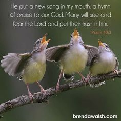 Hymns Of Praise, Psalm 40, Fear Of The Lord, My Mouth, Bible Scriptures, News Songs, Butterfly, God, Dios