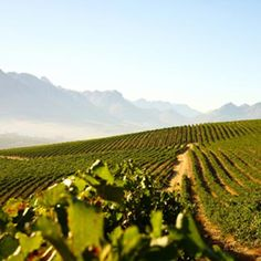 Distell vineyards in Africa