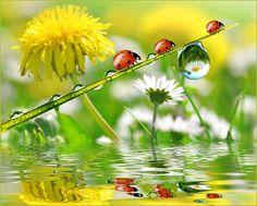 NEW Full Square Cartoon Diy Diamond Painting Ladybug Flower Mosaic Drill Resin Embroidery Needlework Cross Stitch Kits Images Wallpaper, Flower Wallpaper, San Francisco Art, Another Day In Paradise, Mosaic Flowers, New York Art, Mundo Animal, Great Photographers, Macro Photography