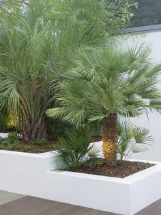 A modern Architectural Garden-Il like creme colored walls and modern vibe, Makale 3 Back Gardens, Outdoor Gardens, Garden Seating, Front Yard Landscaping, Retaining Wall Landscaping, Winter Garden, Water Features, Garden Inspiration, Landscape Design