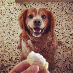 Tanti Auguri Ralf #happybirthday #loveyou #littlebrother #dog #nineyearold #dogcake #hamandcheese