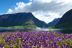 View towards Skjolden and the inner part of the Lustrafjord, Norway