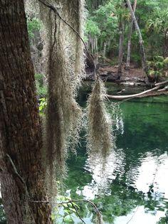 blue springs state park. orange city, florida.