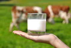 Hoy vamos a hablar de la Leche de Vaca Pasteurizada, es decir del último Veneno blanco. Continuamente nos están bombardeando con infinidad de anuncios y publicidad donde nos quieren vender lo buena y saludable que es la leche y lo importante que es su contenido en calcio entre otras cosas. Esto nos han llevado aSeguir Leyendo …