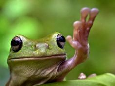 """Top of the morning to you""  Cute frog."