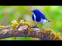 Nastavení - YouTube Morning Sunrise, Sunday Morning, Nature Music, Instrumental Music, Deep Relaxation, Blue Jay, Music Instruments, Songs, Bird
