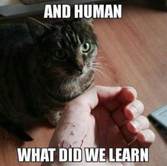 Thankfully, my cat doesn't scratch very much. But he acts like a dog! He's always trying to lick and bite me, just like a doggy would!
