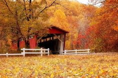 Fall Colors and a Covered Bridge