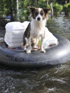 Preparing pets for disaster is just as important as preparing yourself. Do you know these tips in how to prepare your pets?