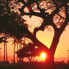 Community Post: 11 Trees That Look Like Hearts