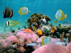 divers poissons