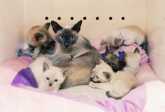 Mum and her babies #cats #eastershow #kittens#animalfamily