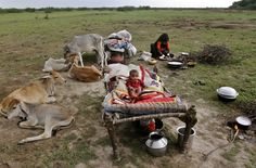A child rests as a woman prepares food near their cattle in Bagodara, west of Ahmedabad, India
