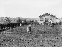 A government tree nursery on Mt. Scopus, Jerusalem (circa 1930) One major activity of the JNF, or in Hebrew the Keren Kayemet LeYisrael, was the planting of trees on Jewish-owned land in Palestine. Many a Jewish home had the iconic JNF blue charity box, or pushke, in order to buy trees.  In its history, the JNF is responsible for planting almost a quarter of a billion trees.
