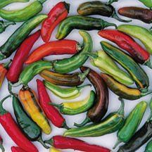 Hot Pepper Fish D46518 (Multi) 25 Heirloom Seeds by David's Garden Seeds David's Garden Seeds http://www.amazon.com/dp/B00TYWUNYS/ref=cm_sw_r_pi_dp_QYKcvb0N31VTS