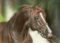 Algraf, Malopolski stallion, soft pastel on velour paper, 25x18 cm, based on the photo made by Ewa Imielska-Hebda.