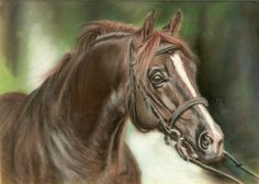 Algraf, Malopolski stallion, soft pastel on velour paper, 25x18 cm, based on the photo made by Ewa Imielska-Hebda.
