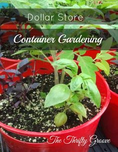 Gardening Tips for Container Gardening Want to do some gardening in your lawns and backyard but don't have much space. Do not worry, try container gardening and overcome this situation, it could be… Gardening For Beginners, Gardening Tips, Gardening Services, Cedar Planter Box, Garden Frogs, Garden Basket, Modern Plant Stand, Container Gardening Vegetables, Vegetable Gardening