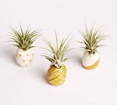 1000 images about project ideas polymer clay on for Air plant holder ideas
