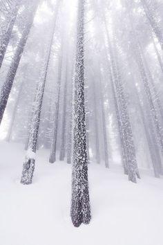 Fabulous Snow Images of This Winter Season 2017/2018 #snow #winter