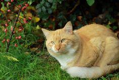 Ginger and the autumn by Loreta Tavoraite on YouPic Canon Ef, Autumn, Cats, Animals, Fall Season, Fall, Gatos, Animaux, Animales