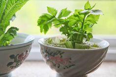 Algunos alimentos son realmente fáciles de volver a crecer en tu casa a partir de las sobras que quedan, y algunos pueden incluso ser cultivados en la barra de tu cocina.
