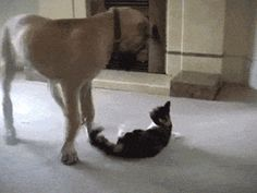 #alifunny #funny #hilarious #humor #lol #funnypictures #fails #memes   #cats