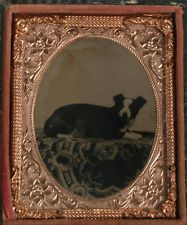 AMBROTYPE RESTING DOG, AMBER GLASS. 1/9TH PLATE, FULL CASE, 1850S.