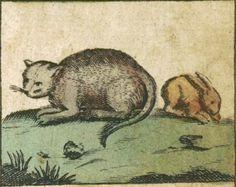 """Cat and rabbit - Illustration from """"Nutzbares Figur- und LernBüchlein : Der zarten Jugend Zur Lust, und gründlichen Unterweisung Wohl-eingerichtet"""" / New ed. by Leonhard Loschge; Nürnberg, 1684"""