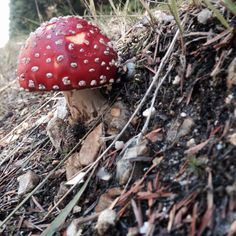 Mushroom and toadstool and art farty photos I took in the woods