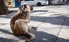 """CIUDAD En Mar del Plata hay 40 caniles para 20 mil perros en estado de calle  Se planea la construcción de otros 40, pero advierten que """"no soluciona"""" la gran cantidad de perros abandonados. """"Las leyes no permiten el sacrificio de animales"""", sostienen desde Zoonosis.  Por: Redacción 0223"""