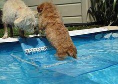 DIY Dog Pool Ramp http://www.make-and-build-dog-stuff.com/pool-dog-ramp.html