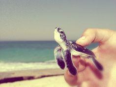 (7) beach | Tumblr