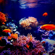 London aquarium, fish, coral, orange, blue, water, reflections