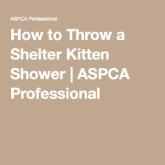 How to Throw a Shelter Kitten Shower | ASPCA Professional