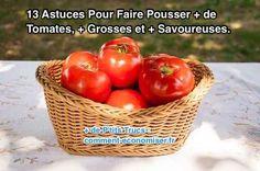 Que vous soyez débutant dans le potager ou passé maître dans l'art de jardiner, nos astuces pour cultiver des tomates vont vous aider à augmenter votre rendement et produire des tomates bien meilleures en goût.   Découvrez l'astuce ici : http://www.comment-economiser.fr/13-astuces-pour-faire-pousser-plus-de-tomates-plus-grosses.html?utm_content=buffer0a76e&utm_medium=social&utm_source=pinterest.com&utm_campaign=buffer