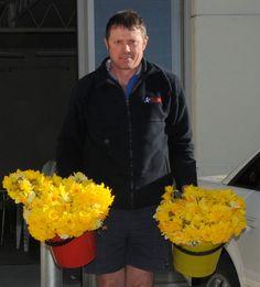 Daffodils everywhere