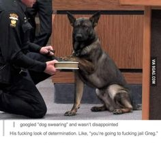 Dog swearing!