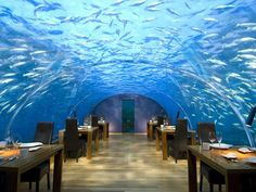 Under water dining! How cool!