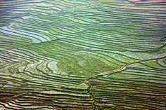 Rice Fields terraces ... / Sapa, Vietnam | par Zé Eduardo...