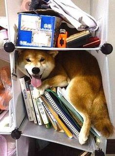 Some one must be afraid of fireworks or thunderstorms, and found a hiding place.