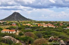Beautiful terrain that can only be found in Aruba. #vacation  #tropical #beach