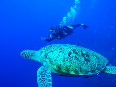 My friend John, diving in Bunaken, Indonesia. Sadly enough i was on the other side of the camera.